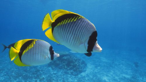 Two Tropical Fish