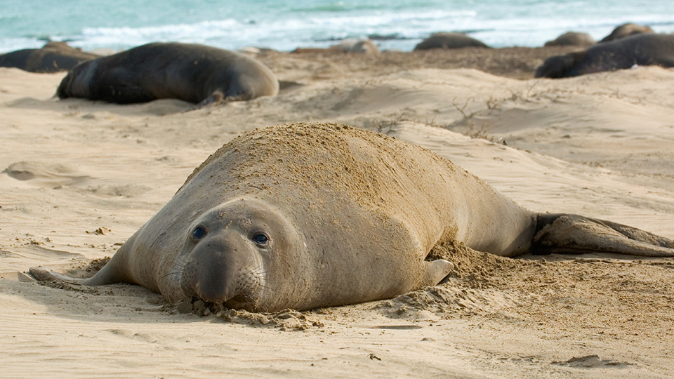 What Elephant Seals Teach Us About Our Waste Mercury
